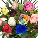 Bibit Bunga Rose Mix