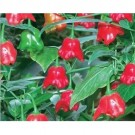 Bibit Ornament Pepper