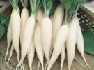 Benih Lobak Putih (Ordinary Radish)
