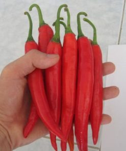 Big Red Chili