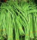 Benih Kacang Panjang (String Bean)