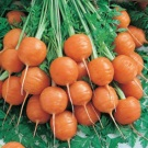 Wortel Bulat (Parisian Carrot)