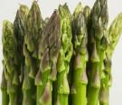 Bibit Asparagus