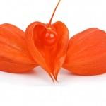 Benih Bunga Chinese Lantern 15 Biji – Non Retail