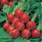 Lobak Scarlet Globe