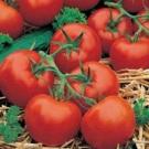 Tomat Ferline