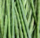 Benih Sayur Kelor (Merunggai)