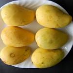 Tanaman Mangga Chokanan