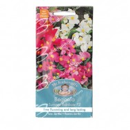 Mr Fothergills Begonia Summer Rainbow F2