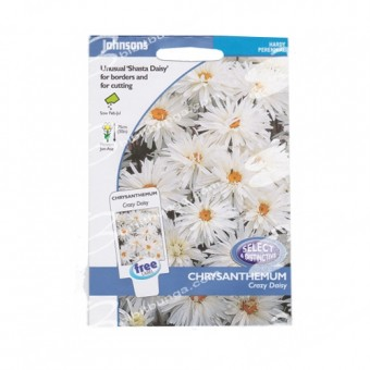 Benih Chrysanthemum Crazy Daisy 75 Biji – Johnsons Seeds