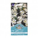 Mr Fothergills Night Phlox Midnight Candy