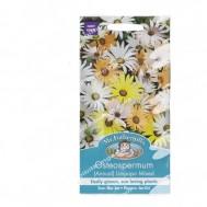 Mr Fothergills Osteospermum Limpopo Mixed