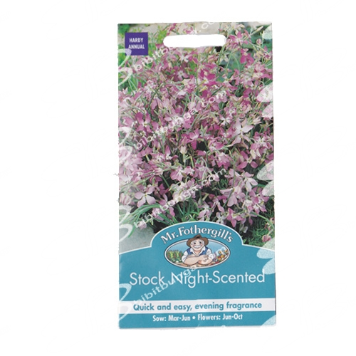 stock-night-scented