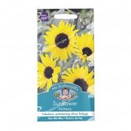 Mr Fothergills Sunflower Alchemy