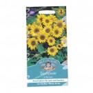 Mr Fothergills Sunflower Little Leo