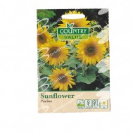Country Value Sunflower Pacino