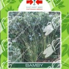 Panah Merah Seledri Bamby