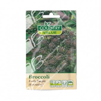 Benih Broccoli Early Purple 400 Biji – Country Value
