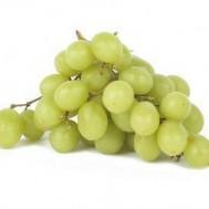 Tanaman Anggur Hijau Lokal
