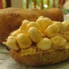 Tanaman Cempedak Durian