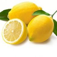 Tanaman Jeruk Lemon Impor