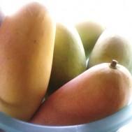 Tanaman Mangga Mahachanok (Mangga Pelangi)