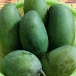 Tanaman Mangga Sala