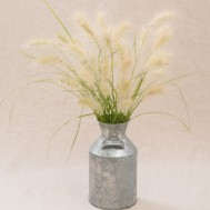 Benih Feathertop Ornamental Grass