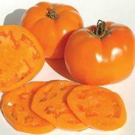 Benih Tomat Valencia