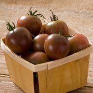 Benih Tomato Black Cherry