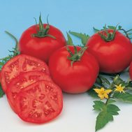 Benih Tomato Moskvich