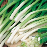 Benih Onion Ishikura