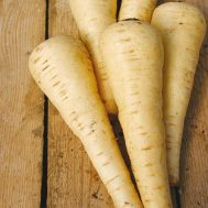 Benih Parsnip Countess F1
