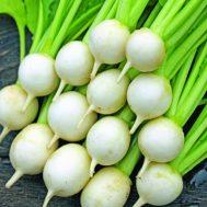 Benih Turnip Sweet Marble F1