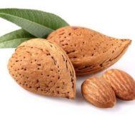 Benih Kacang Almond (Almond Nut)