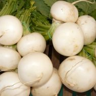 Benih Turnip White Egg