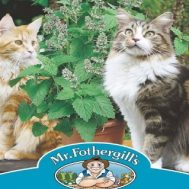 Benih Mr Fothergills Catnip Catmint