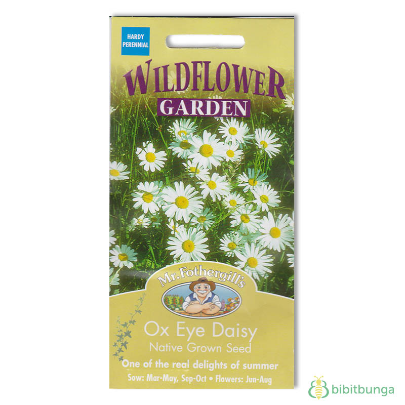 ox-eye-daisy-native-grown-seed