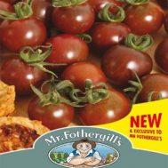 Benih Tomato Black Opal 15 Biji – Mr Fothergills