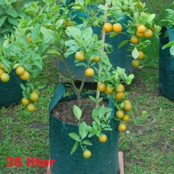Planter Bag Hijau 35 Liter