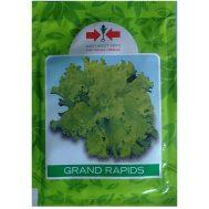 Benih Selada Hijau Grand Rapids 15 gram – Panah Merah