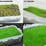 Grass Seed Small Leaf Aquascape – 5ml