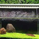 Carpet Seed Mini Dwarf Aquascape – 5ml