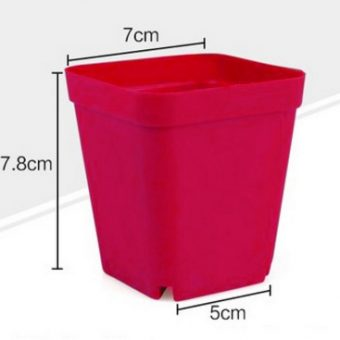 Pot Kaktus & Sukulen Mini – Merah Anggur – 6 Pcs