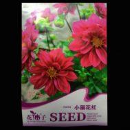 Benih Dahlia Mini Merah 50 Biji – Retail Asia