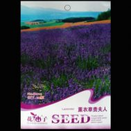 Benih French Lavender 20 biji – Retail Asia