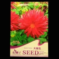Benih Garden Dahlia 30 Biji – Retail Asia