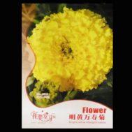 Benih Bunga Marigold Bright Yellow 50 Biji – Retail Asia