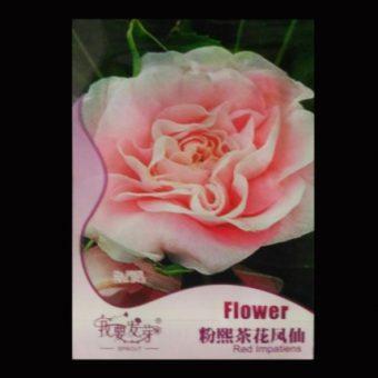 Benih Bunga Pink Camellia Impatiens 25 Biji – Retail Asia