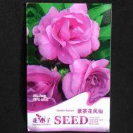Benih Purple Camellia Impatiens 20 Biji – Retail Asia